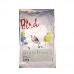 Bird Girasole Piccolo Per...